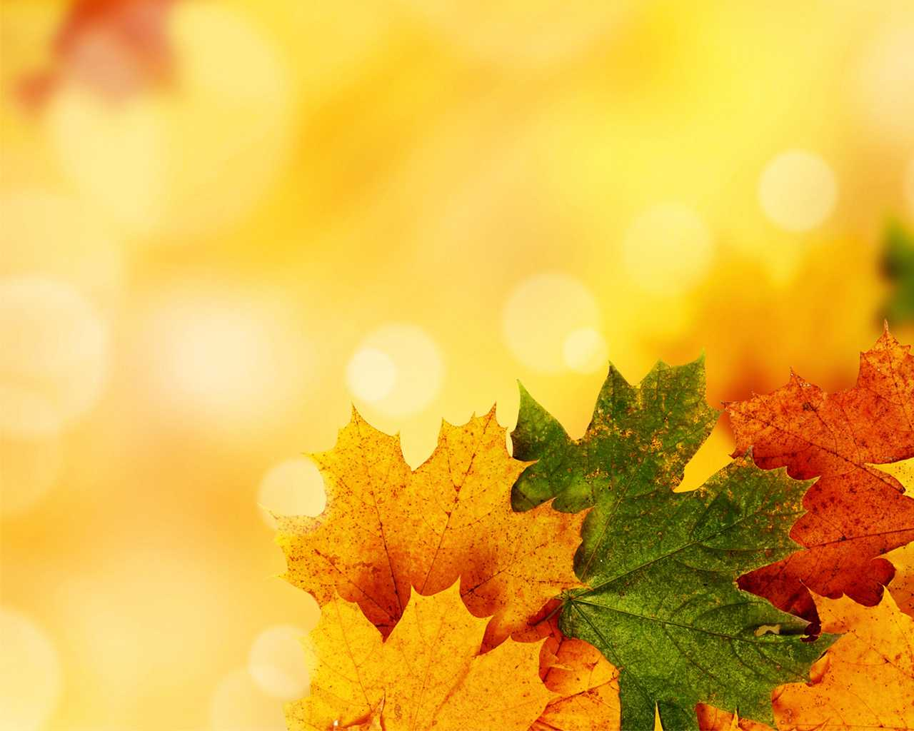 Fall Ppt Background - Colona.rsd7 Throughout Free Fall Powerpoint Templates